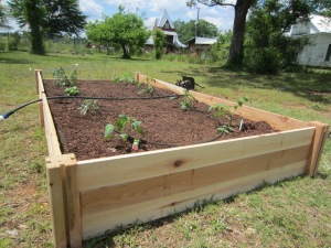 new raised beds